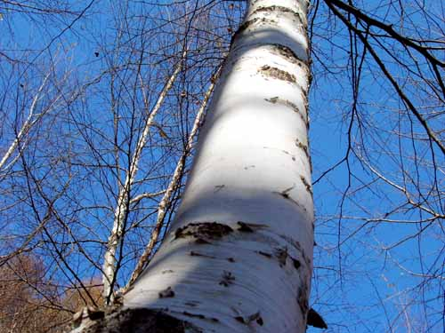 희망이여 억센 나무처럼 살라