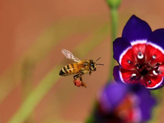 벌과 나비 그리고 야생화